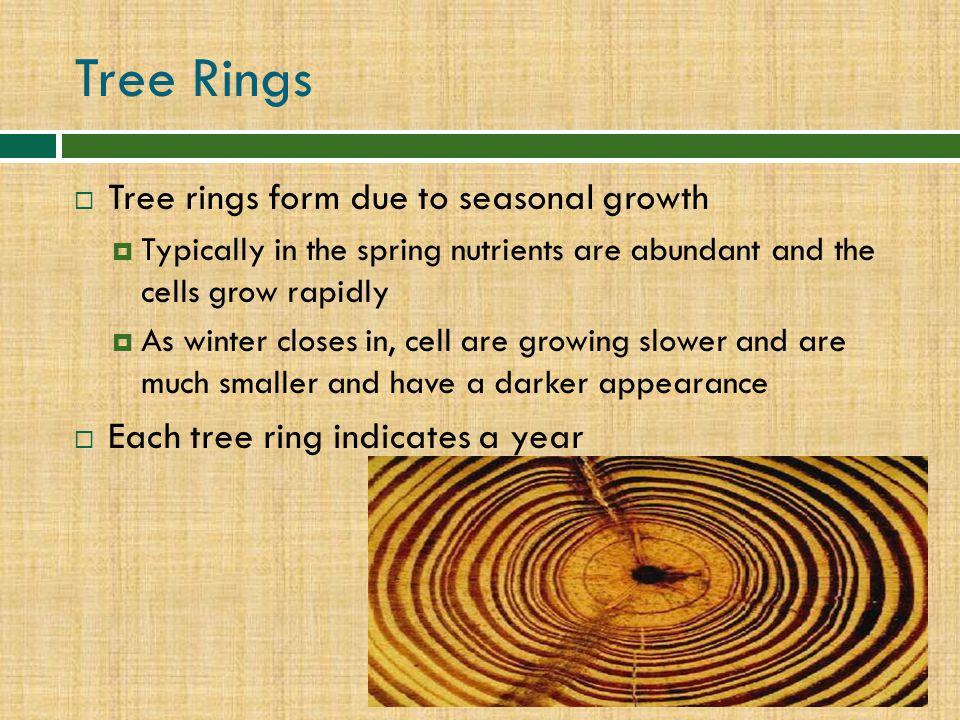 Tree Rings Tree rings form due to seasonal growth