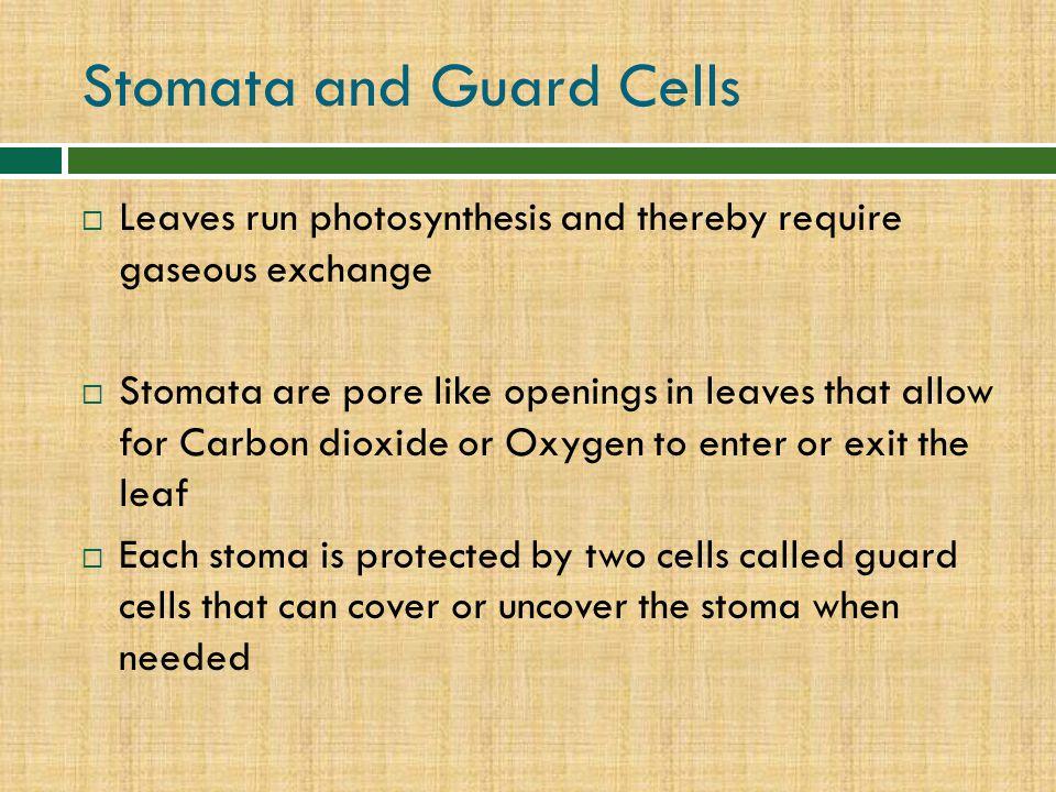 Stomata and Guard Cells