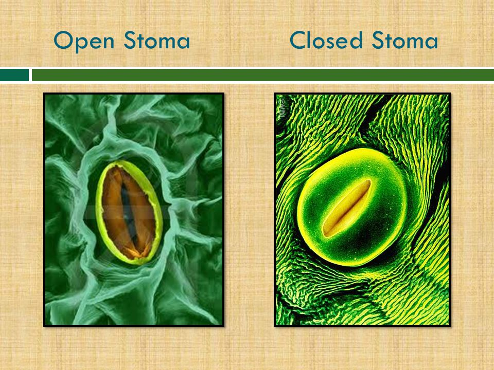 Open Stoma Closed Stoma