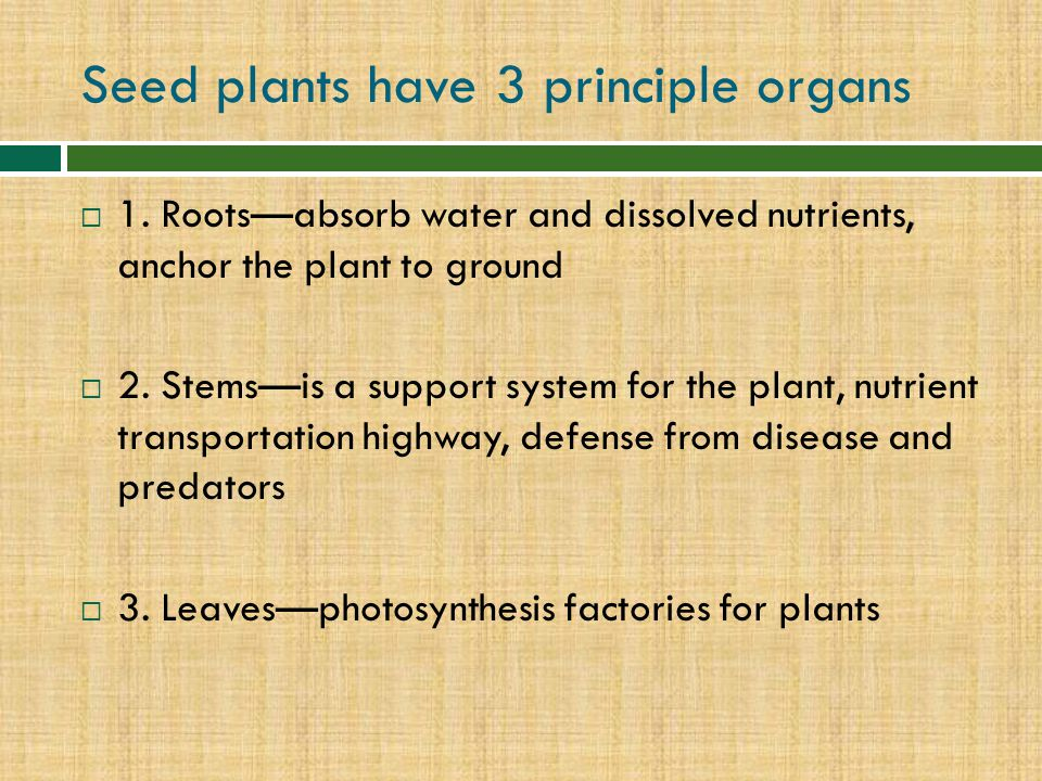 Seed plants have 3 principle organs