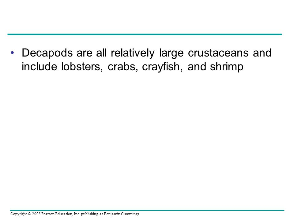 Decapods are all relatively large crustaceans and include lobsters, crabs, crayfish, and shrimp