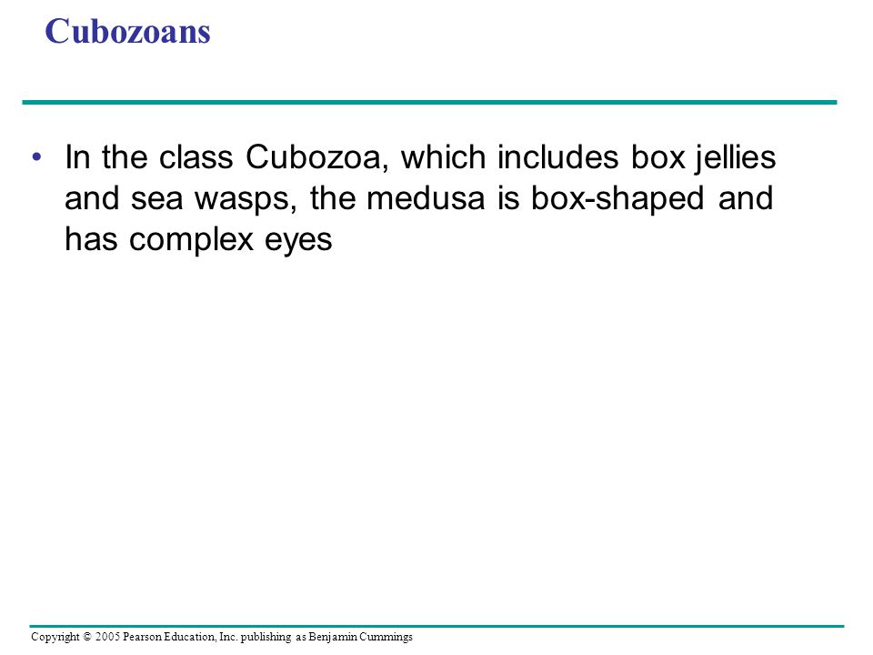 Cubozoans In the class Cubozoa, which includes box jellies and sea wasps, the medusa is box-shaped and has complex eyes.