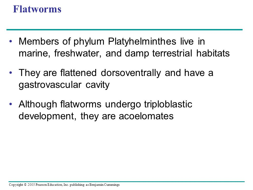 Flatworms Members of phylum Platyhelminthes live in marine, freshwater, and damp terrestrial habitats.