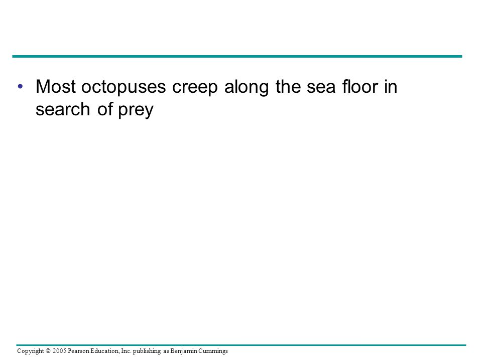 Most octopuses creep along the sea floor in search of prey