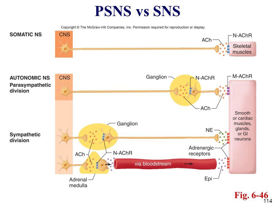 PSNS vs SNS Fig. 6-46