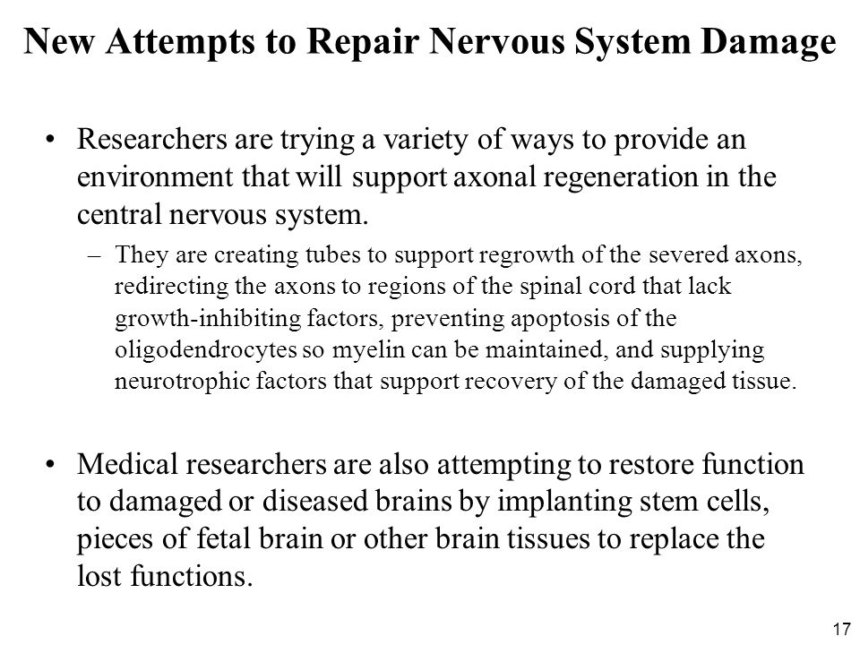 New Attempts to Repair Nervous System Damage