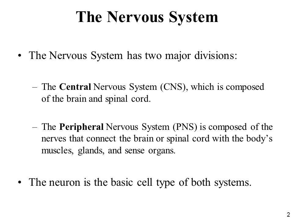 The Nervous System The Nervous System has two major divisions: