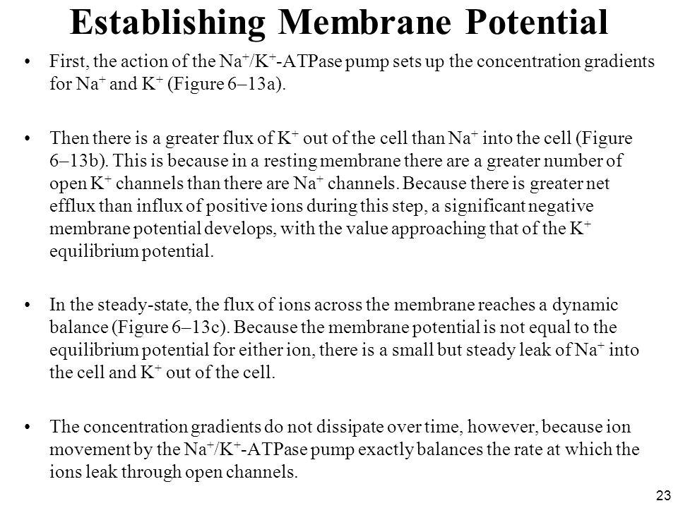Establishing Membrane Potential
