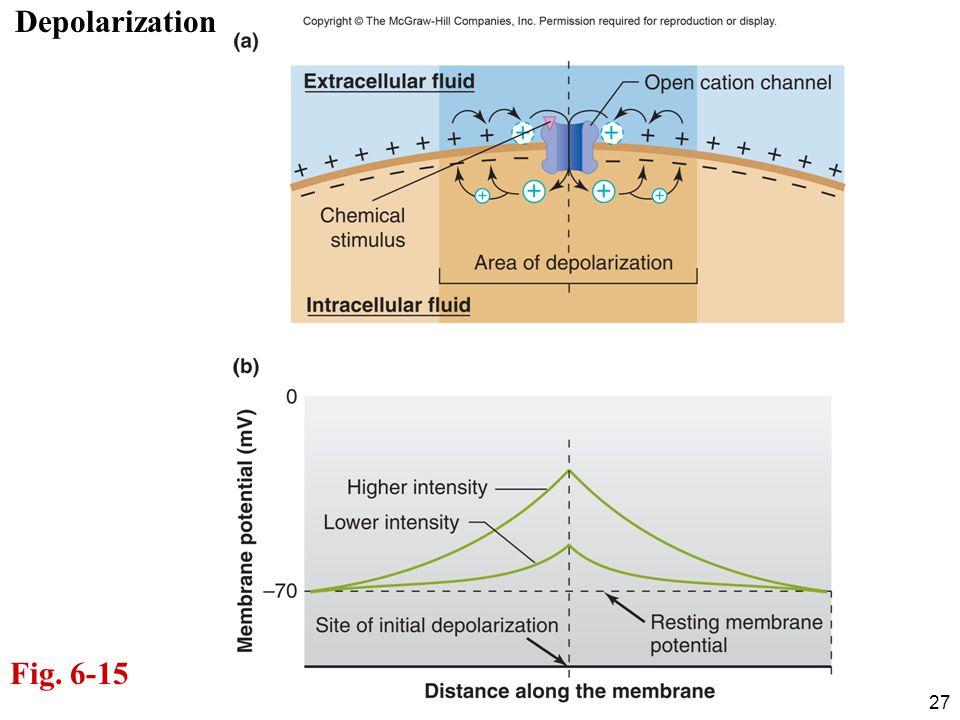 Depolarization Fig. 6-15