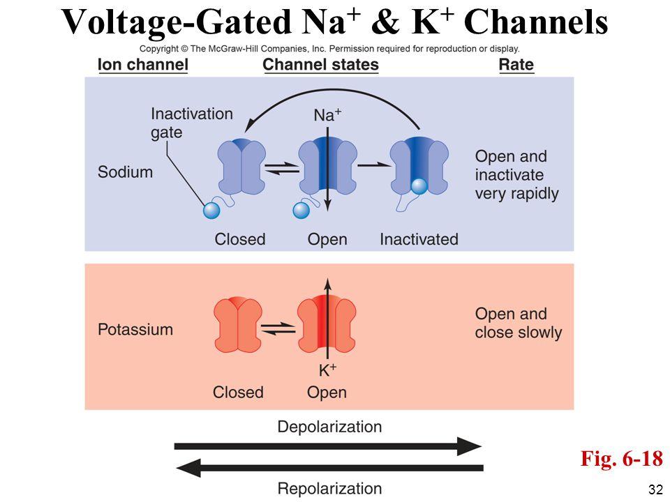 Voltage-Gated Na+ & K+ Channels