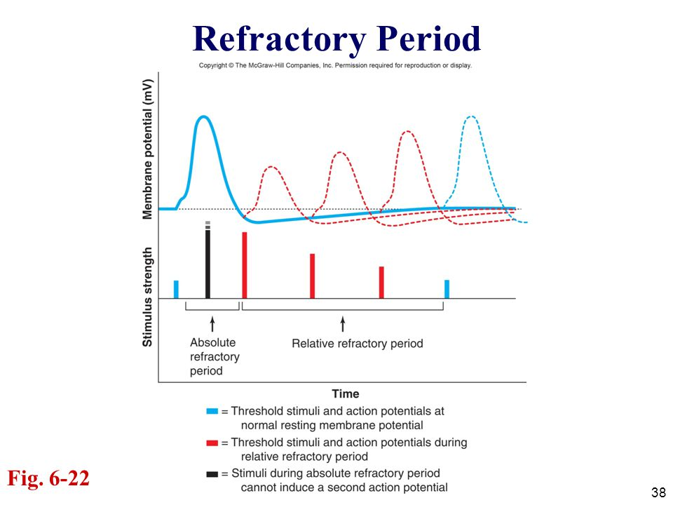 Refractory Period Fig. 6-22