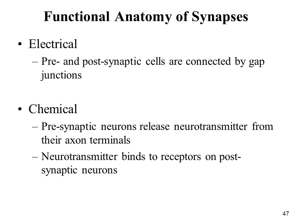 Functional Anatomy of Synapses