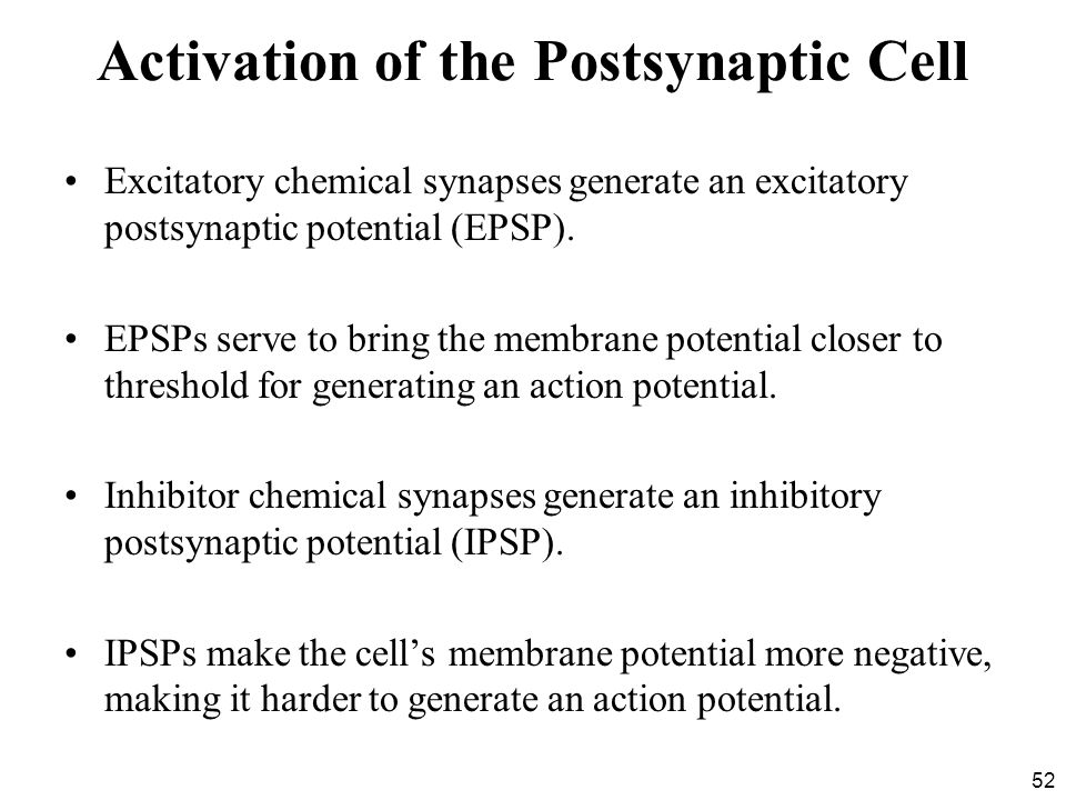 Activation of the Postsynaptic Cell