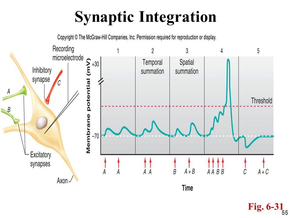 Synaptic Integration Fig. 6-31