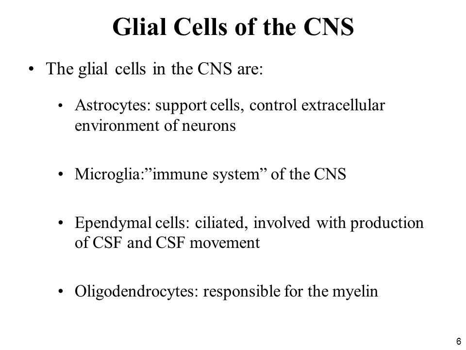 Glial Cells of the CNS The glial cells in the CNS are: