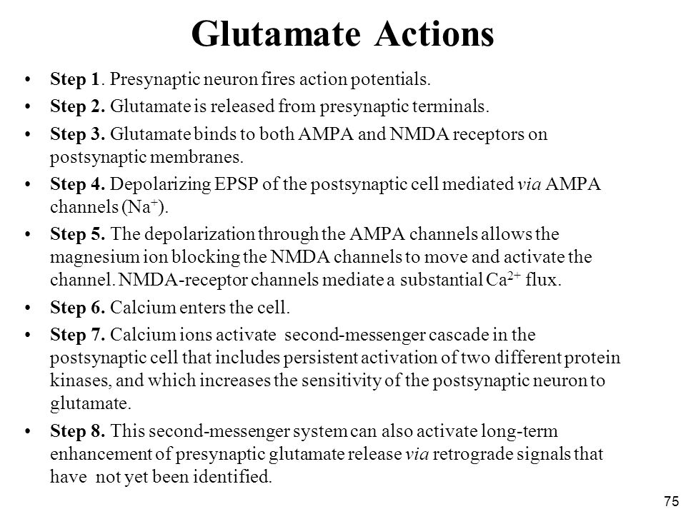 Glutamate Actions Step 1. Presynaptic neuron fires action potentials.
