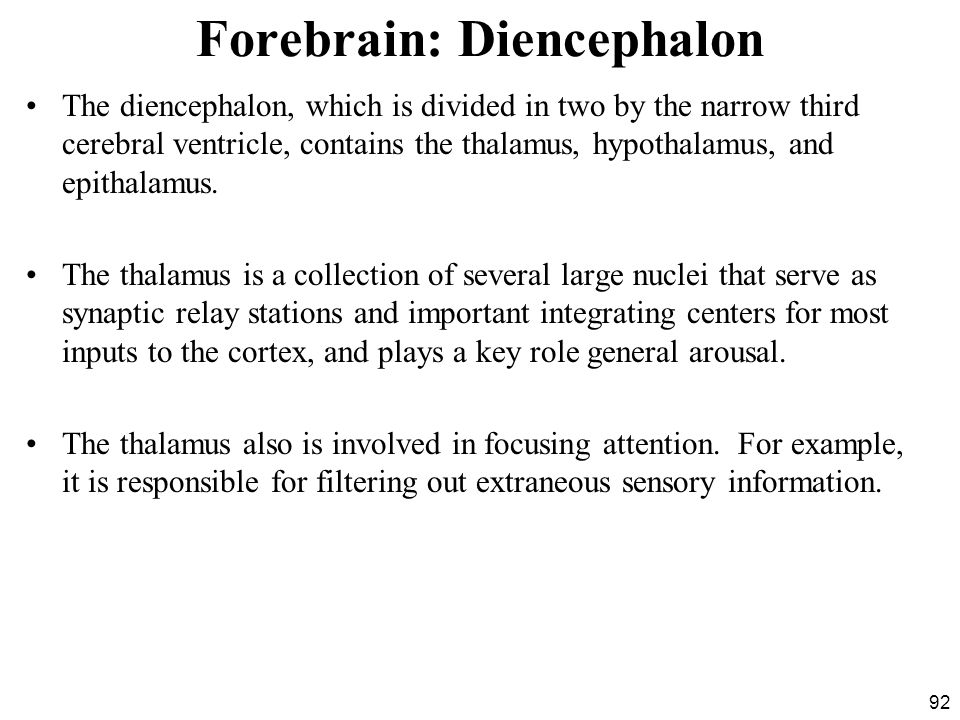 Forebrain: Diencephalon