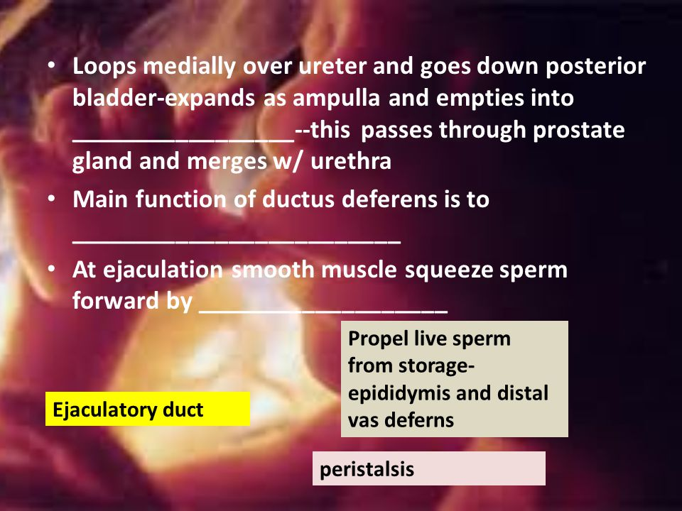Main function of ductus deferens is to _________________________