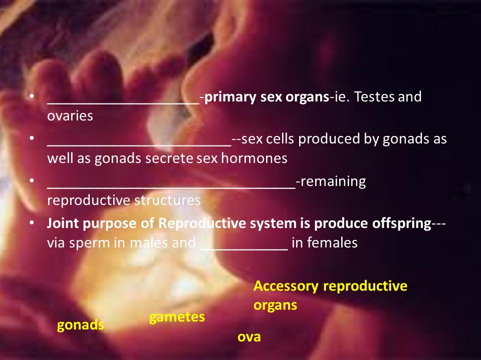 ___________________-primary sex organs-ie. Testes and ovaries