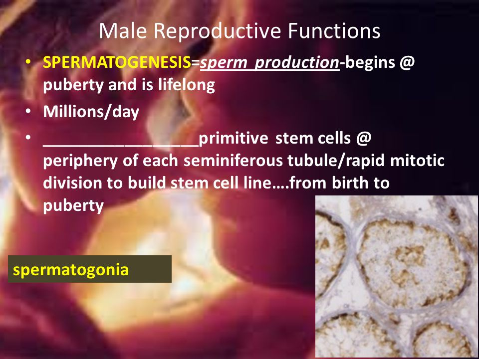 Male Reproductive Functions