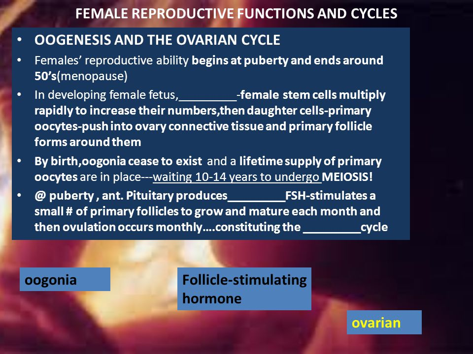 FEMALE REPRODUCTIVE FUNCTIONS AND CYCLES