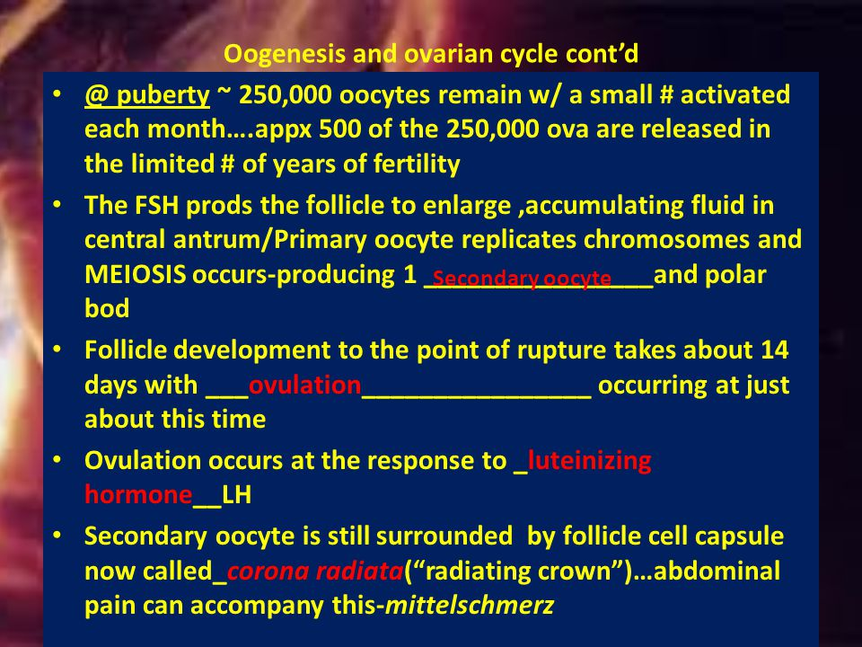 Oogenesis and ovarian cycle cont'd
