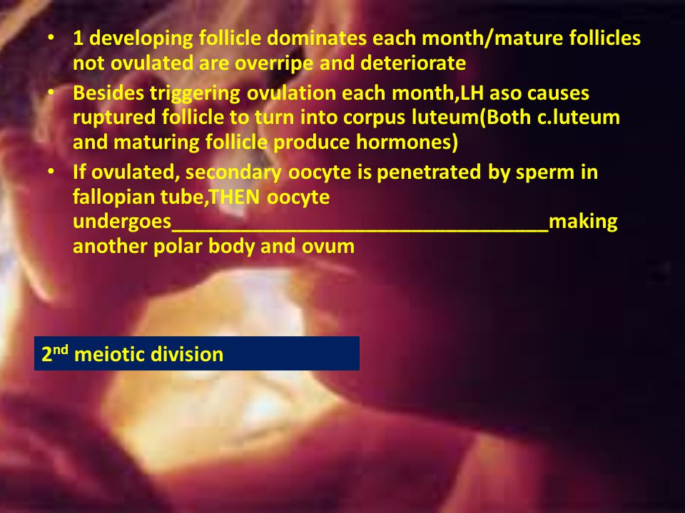 1 developing follicle dominates each month/mature follicles not ovulated are overripe and deteriorate