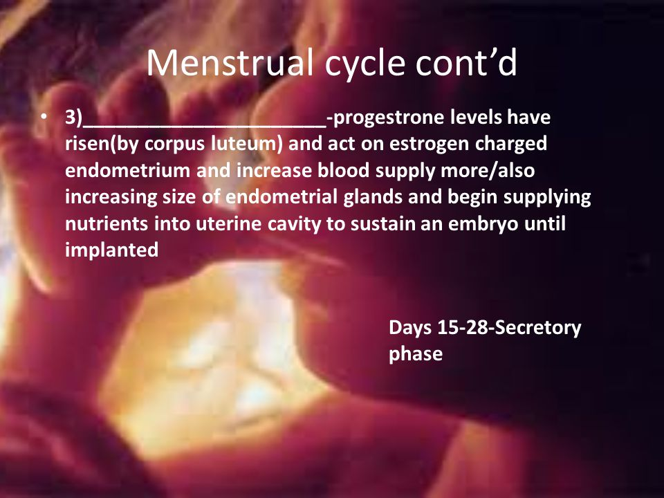 Menstrual cycle cont'd