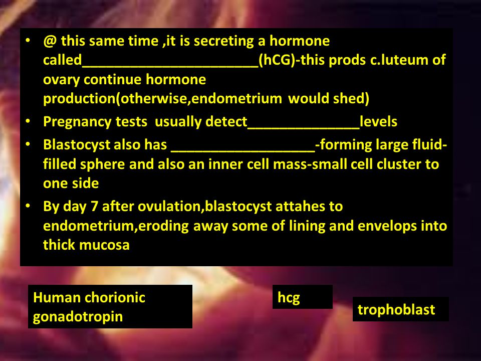 @ this same time ,it is secreting a hormone called______________________(hCG)-this prods c.luteum of ovary continue hormone production(otherwise,endometrium would shed)