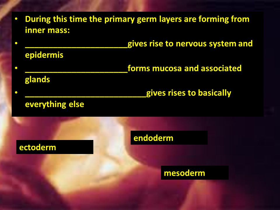 During this time the primary germ layers are forming from inner mass: