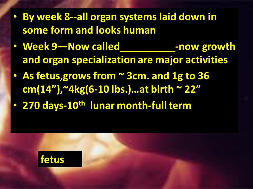 By week 8--all organ systems laid down in some form and looks human