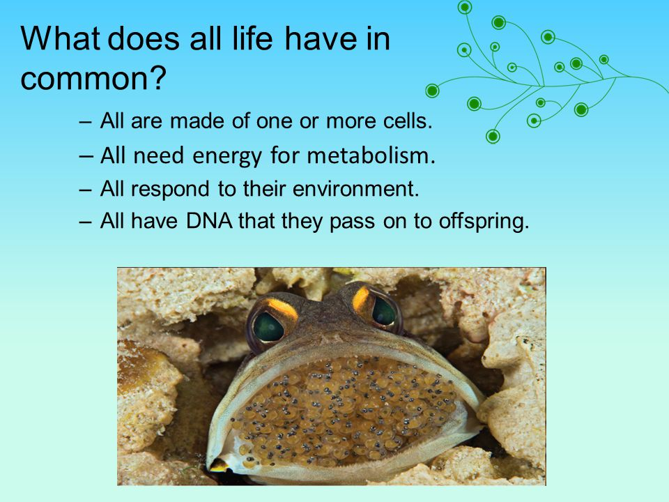 What does all life have in common