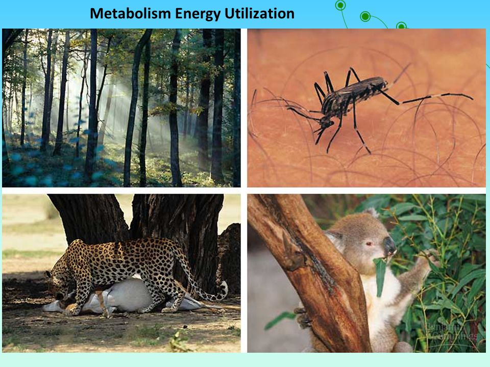Metabolism Energy Utilization