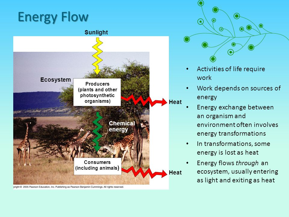 Energy Flow Activities of life require work
