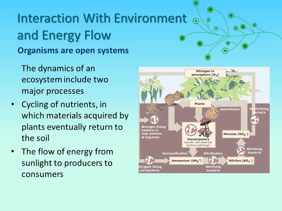 Interaction With Environment and Energy Flow