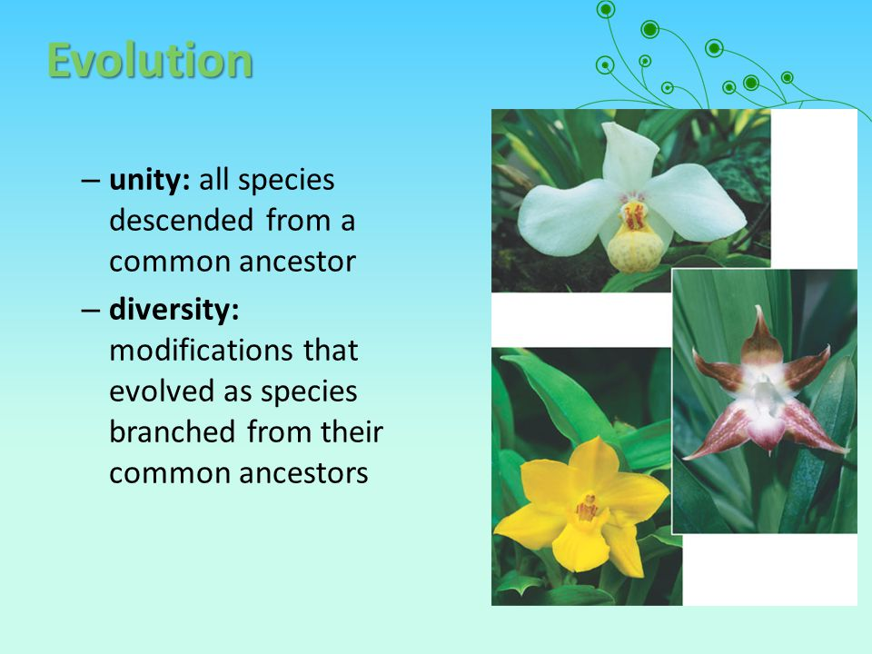 Evolution unity: all species descended from a common ancestor