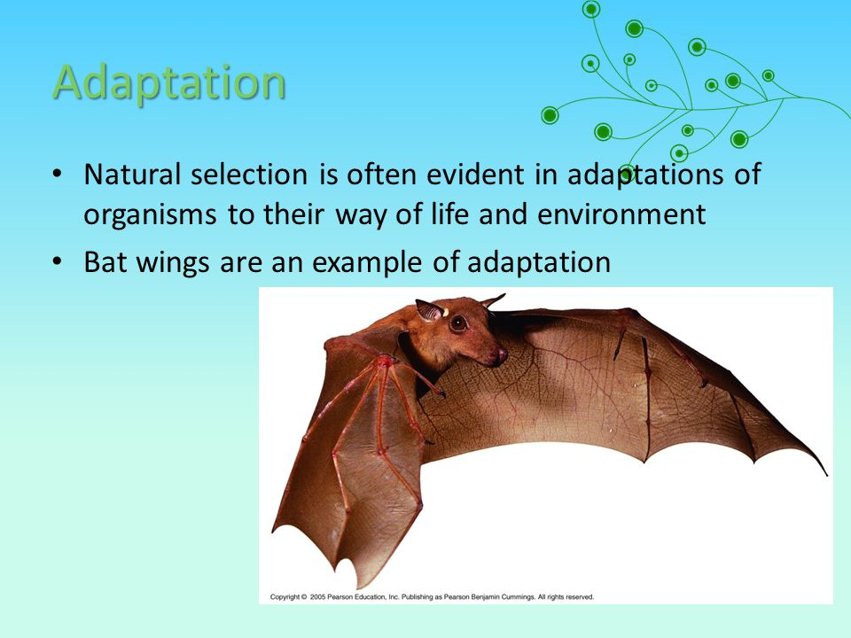 Adaptation Natural selection is often evident in adaptations of organisms to their way of life and environment.