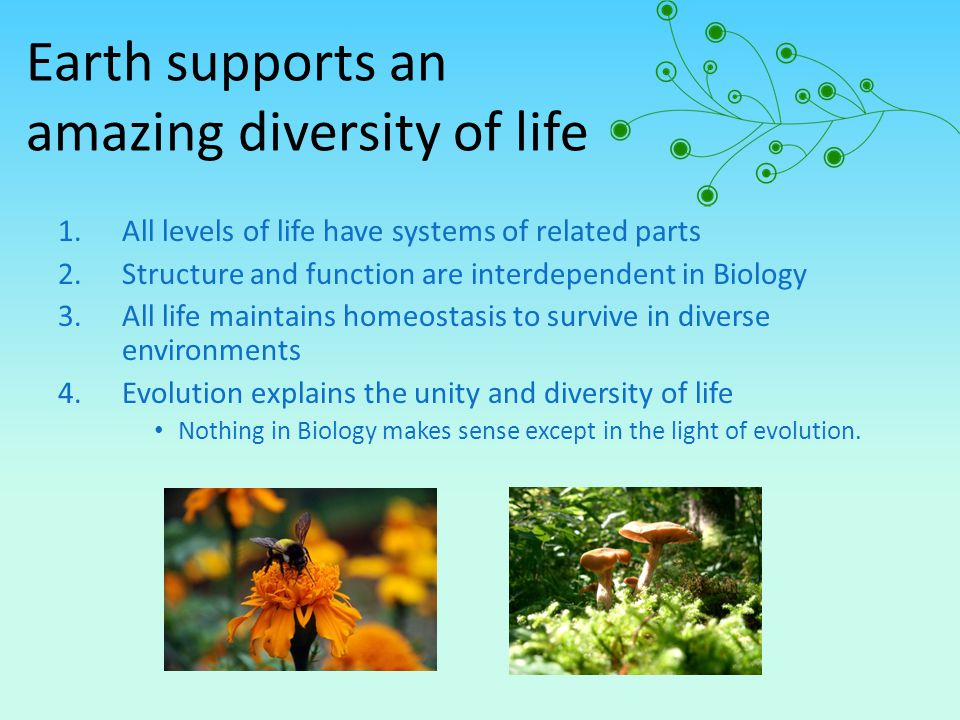 Earth supports an amazing diversity of life