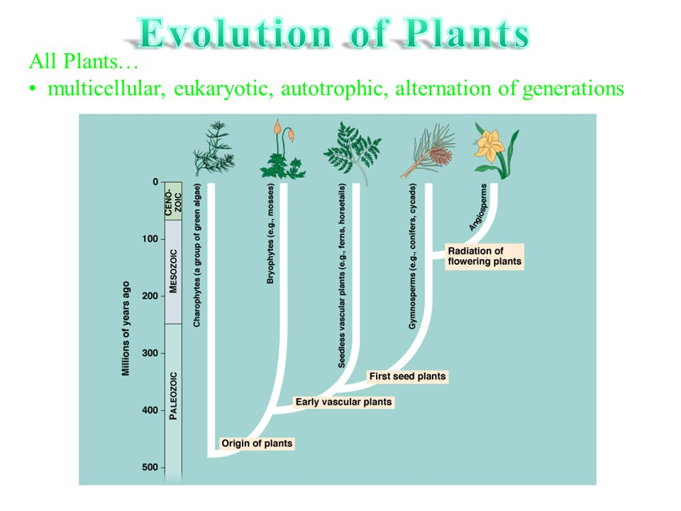 Evolution of Plants All Plants…