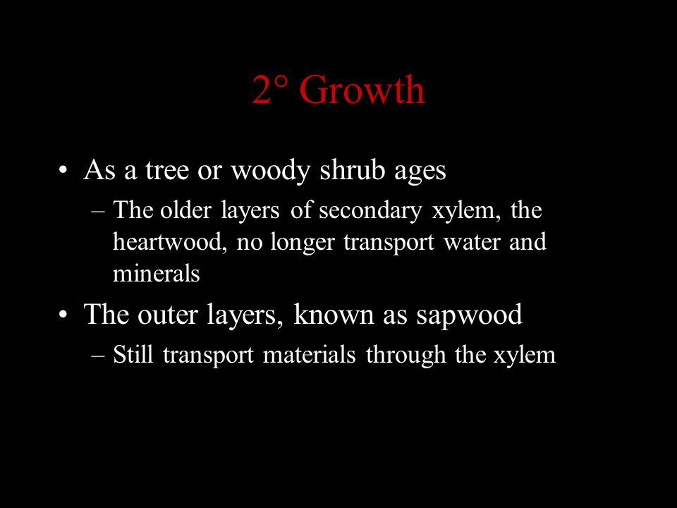 2° Growth As a tree or woody shrub ages