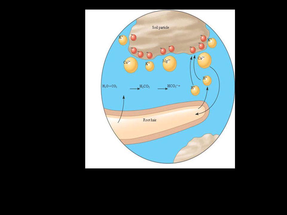 Figure 37.6b Soil particle – K+ Ca2+ Mg2+ Cu2+ H+ H2CO3 HCO3– +