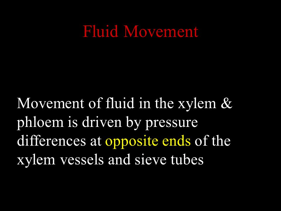 Fluid Movement Movement of fluid in the xylem & phloem is driven by pressure differences at opposite ends of the xylem vessels and sieve tubes.