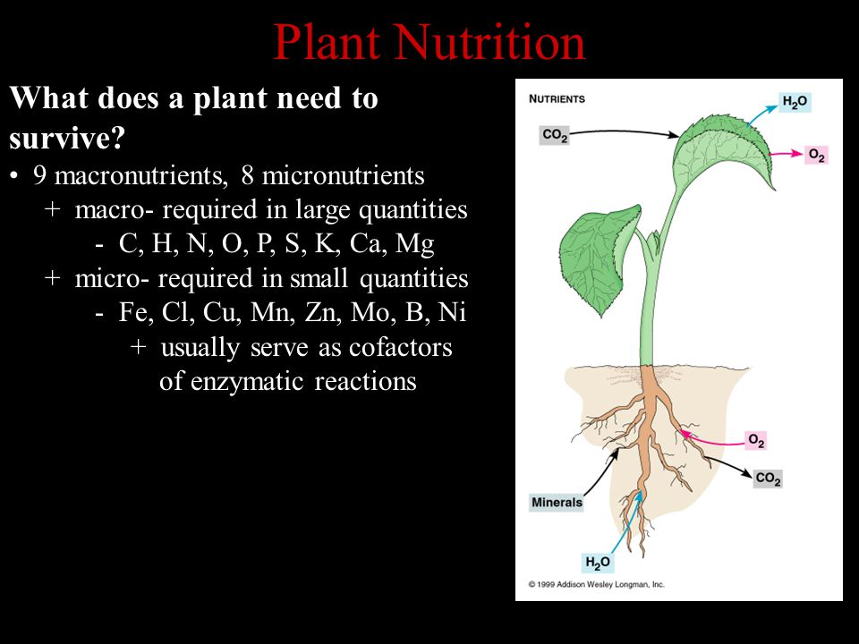 Plant Nutrition What does a plant need to survive