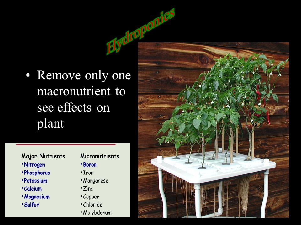 Hydroponics Remove only one macronutrient to see effects on plant