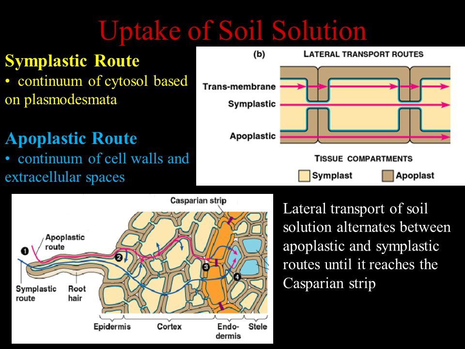 Uptake of Soil Solution