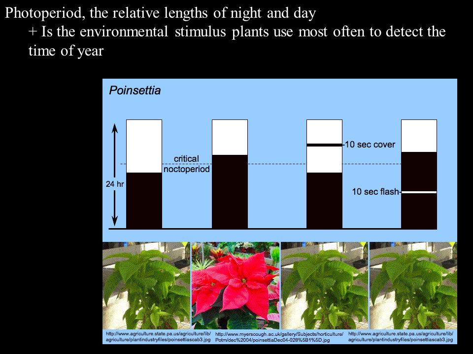 Photoperiod, the relative lengths of night and day