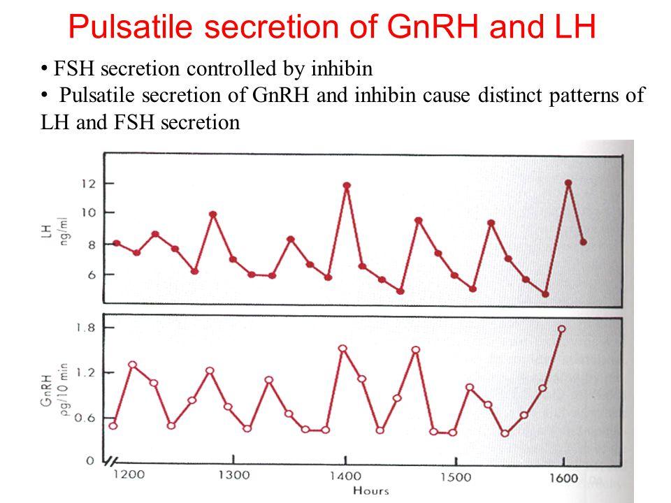 Pulsatile secretion of GnRH and LH