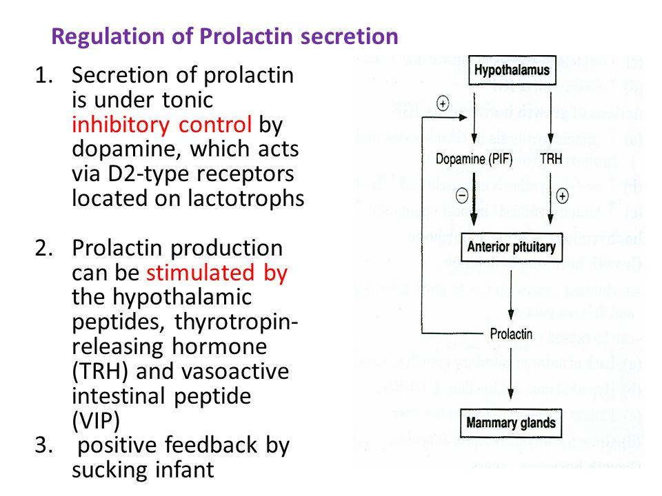 Regulation of Prolactin secretion