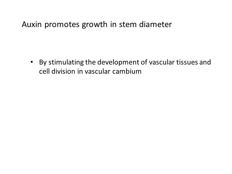 Auxin promotes growth in stem diameter