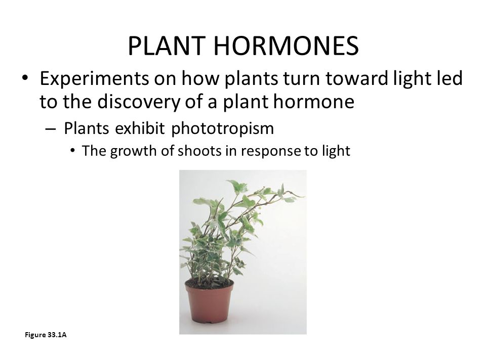 PLANT HORMONES Experiments on how plants turn toward light led to the discovery of a plant hormone.
